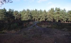 Bronze Age Barrow on Horsell Common