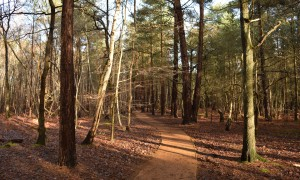 Bedser Trail on Horsell Common