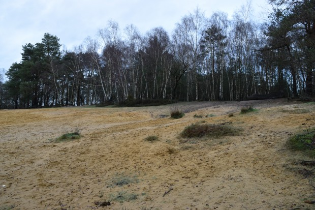 The Sandpit on Horsell Common