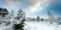 Horsell Common in the Winter Snow